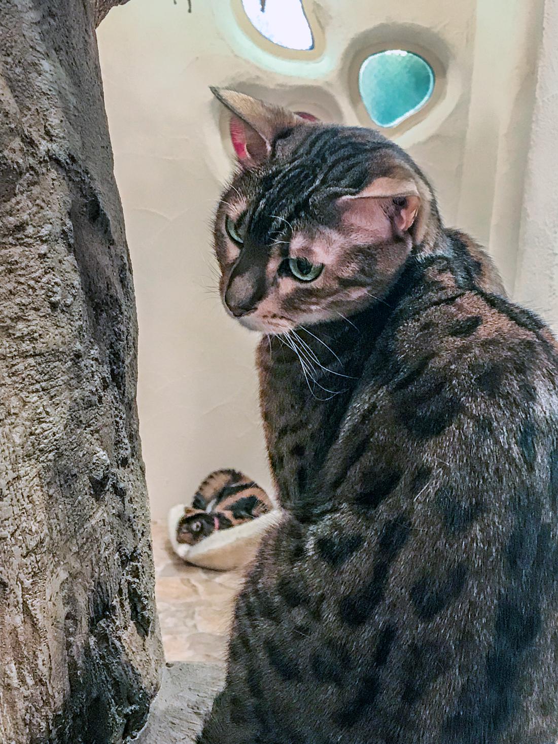 A Sad Cat in a Neko Cafè